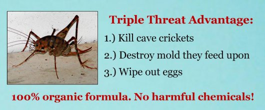 wholesale natural pesticides get rid of cave crickets camel rh wholesalepesticides com how to get rid of cricket spiders in basement how to get rid of camel crickets in basement